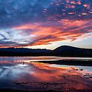 Pond Sunset by Cat Connor