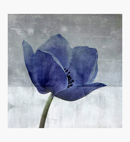 Blue Poppy Photographic Print
